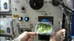 [WOW] Beginilah Astronot Jalani Rutinitas Sehari-hari di Antariksa