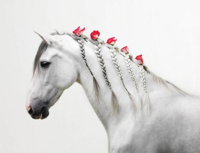 Cantik Tidak hanya Milik Manusia Saja. Kuda juga Boleh Cantik Lho...