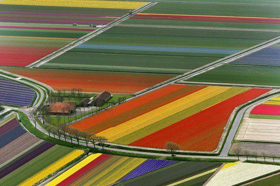Pemandangan Indah Taman Bunga di Amsterdam Belanda Tampak Dari Udara...