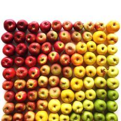 10 Buah-buahan Paling Sehat Didunia Sepanjang Masa