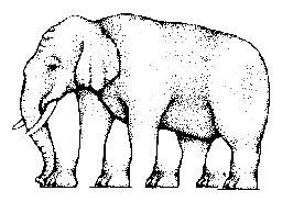 """Anda akan kehilangan lagi kemampuan berhitung anda. Hitung jumlah kaki gajah pada gambar di bawah"""""""