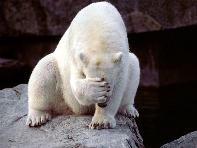 9. Siapa bilang beruang kutub ada di Antartika?Kamu nggak bakal nemuin beruang kutub disana Pulsker.