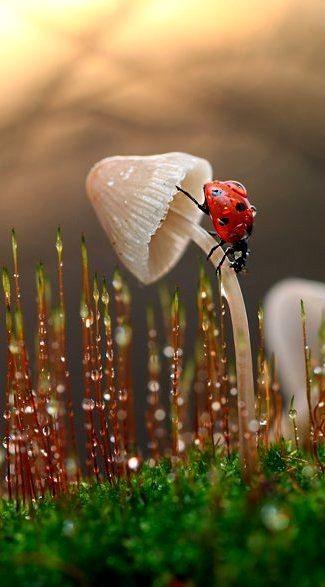 Fotografi keren ketika seekor kumbang hinggap disebuah jamur yang tumbuh subur