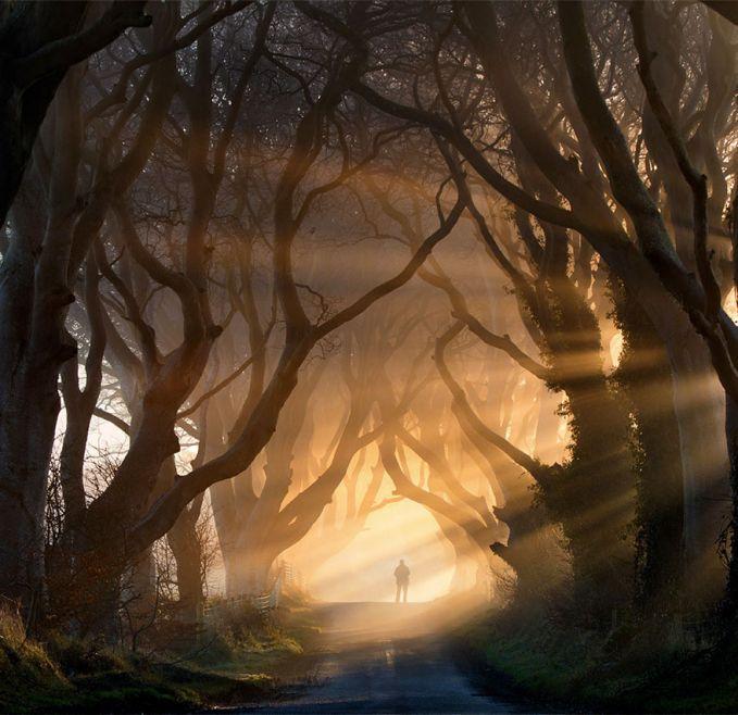 dark, istilah yang tepat untuk pohon ini, tapi tetep keren