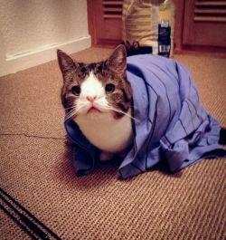 12 Kucing Paling Terkenal di Internet, Lucu & Menggemaskan !