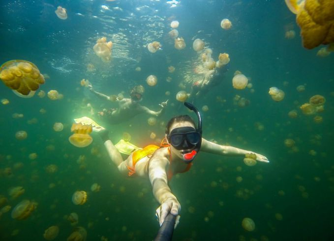 Selifie dibawah laut dengan ubur-ubur, siapa takut