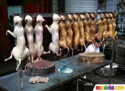 Sadisnya Pasar Anjing & Kucing di Yulin, China
