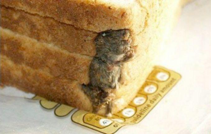 5. Tikus di dalam Roti Tawar Stephen Forse menemukan tikus yang sudah mati lengket pada roti tawar yang akan dia buat sanwich untuk anaknya.
