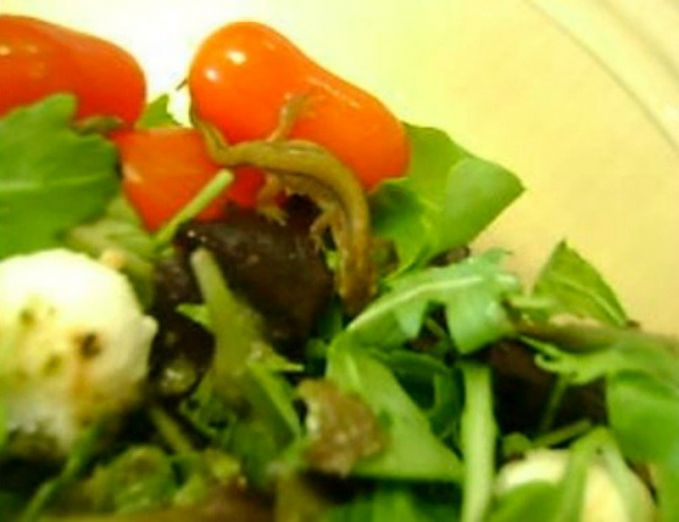 8. Salad Cicak Seorang wanita menemukan cicak hidup di salad yang akan dia makan.hiii