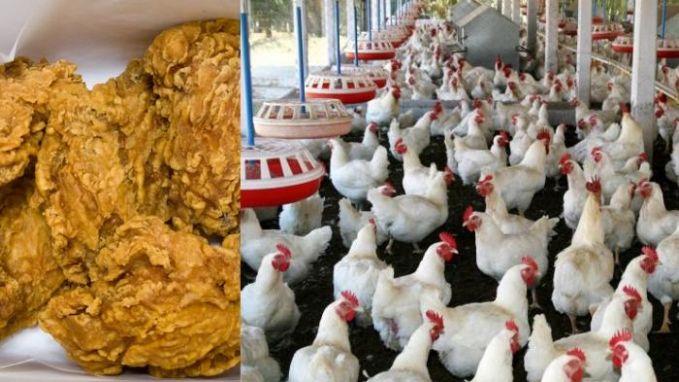 60 Tahun Disembunyikan, Inilah Kebohongan Amerika Soal Ayam Potong