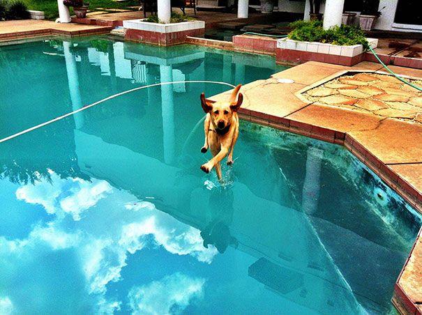Anjingnya bisa berjalan di atas air...hebat