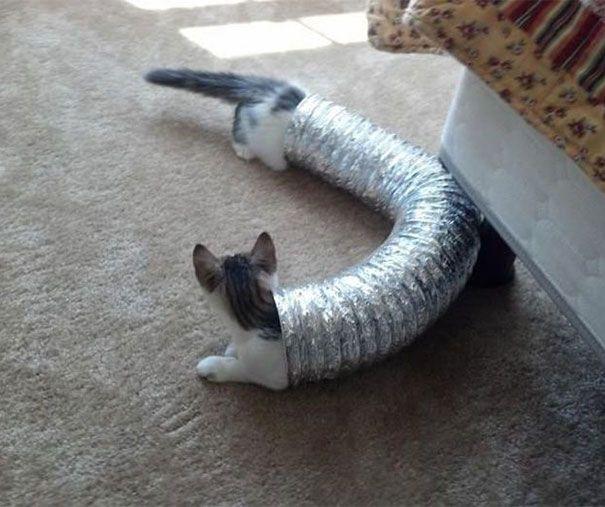 WOW Tubuh Kucing ini panjang banget ya