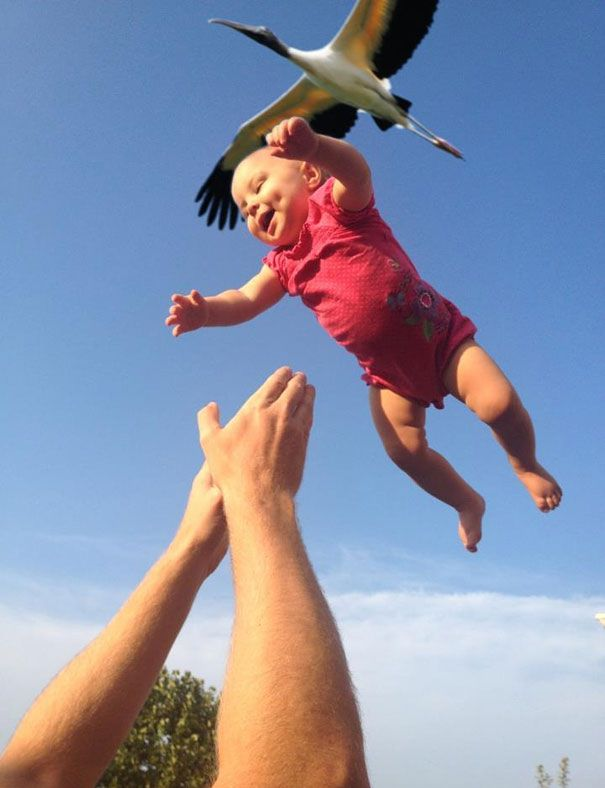 bayi ini numpang terbang bersama burung...