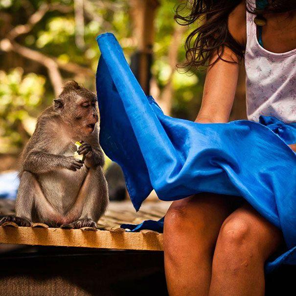 diihh.. monyetnya ngintip daleman rok si cewek