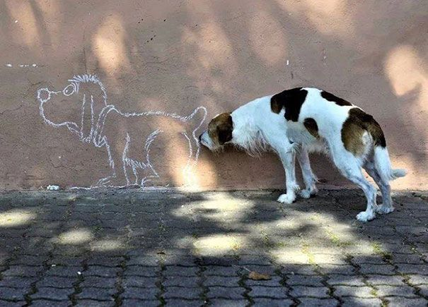 ini anjing ngapain ya, menciumi pantat gambar