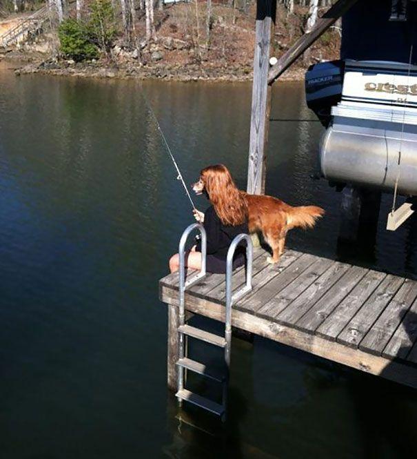 anjingnya keren banget bisa memancing ikan