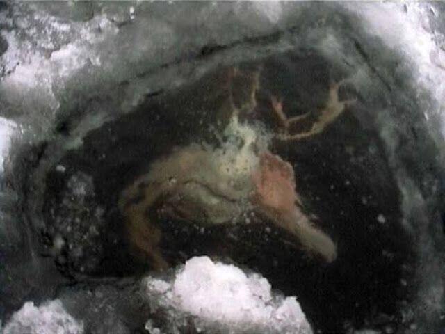 Makhluk mirip manusia yang terperangkap di dalam es!