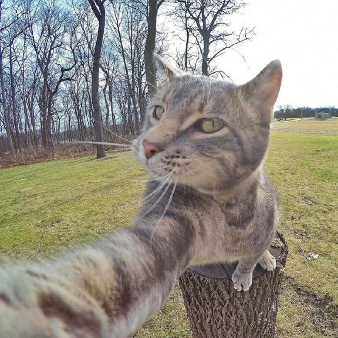Kumpulan Foto Selfie Kucing Kekinian