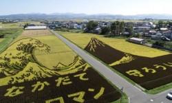 MENAKJUBKAN! Ketika Ladang Padi Disulap Menjadi Karya Seni