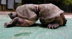 Kasihan! Hewan-hewan ini tersiksa karena sampah manusia