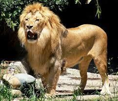 [Masya ALLAH] Kisah Ibnu Umar radhiallahuanhu, Penakluk Singa yang Ahli Sedekah