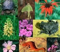 Negara Megabiodiversitas Julukan ini diberikan kepada Indonesia karena para peneliti dunia kagum akan keanekaragaman flora dan fauna yang ada termasuk spesies purba dan spesies langka di indonesia seperti komodo, anggrek hitam dan raflessia arnoldi