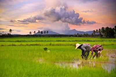 Negara Agraris Julukan ini mengacu pada kenyataan bahwa lahan pertanian Indonesia sangat luas dengan sebagian besar mata pencaharian penduduk kita sebagai petani