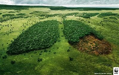Paru-Paru Dunia Julukan ini beberapa kali di sematkan oleh AS dan Singapura melihat pulau Kalimantan sebagai hutan yang harus dilindungi karena berfungsi sebagai penopang paru-paru dunia