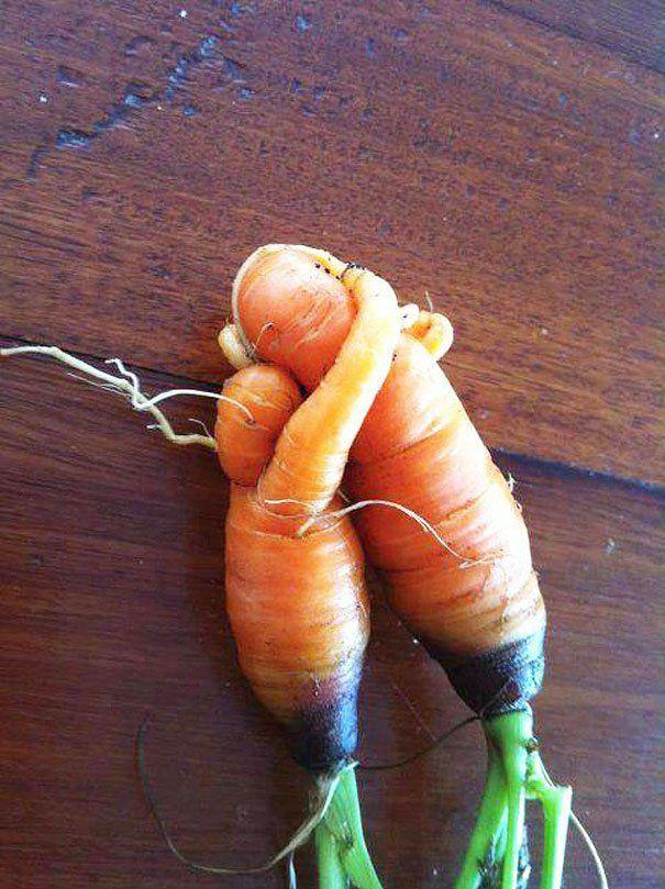 uuhhh romantis banget...wortelnya berpelukan nih...