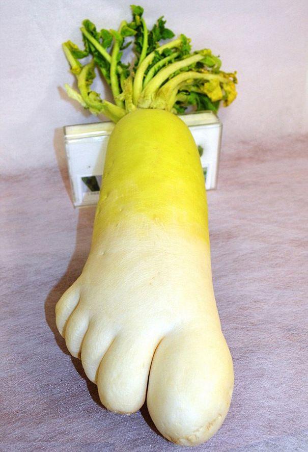wow lobak ini berbentuk kaki sangat besar...ada 5 jari kaki lho...