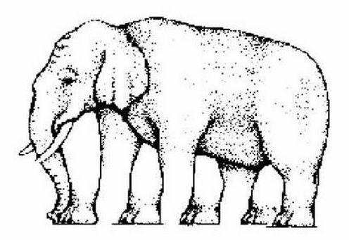 Berapa Jumlah Kaki Si Gajah