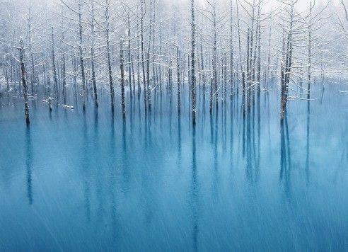 Gambar wallpaper Macbook ini merupakan foto yang diambil di sebuah kota di Jepang bernama Biei. Ini adalah deretan pohon unik yang disebut dengan Blue Pond. Danau dengan pepohonan mati yang masih berdiri dengan baik ini bisa berubah warna sesuai dengan bias cahaya.