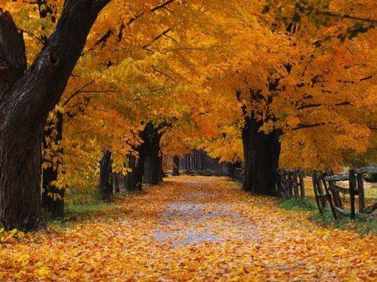 Lokasi ini bisa Anda jumpai di kawasan Burlington, Ontario, Kanada. Jika Anda ingin merasakan berada di tempat tersebut dengan suasana seperti yang ada di komputer maka datanglah pada saat musim gugur. Berjalan di jalan setapak yang dipenuhi dengan guguran daun berwarna cokelat sama persis seperti di komputer.