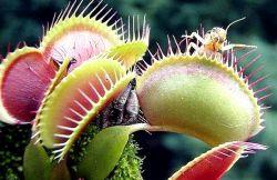 10 Tumbuhan Karnivora Pemangsa Yang Ada Di Dunia.. !!!