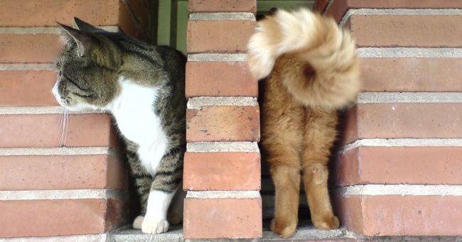 Tebak, ada berapa kucing digambar ini?