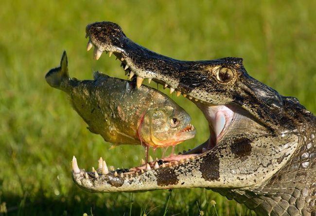 Lihat deh ekspresi ikannya sebelum dimakan