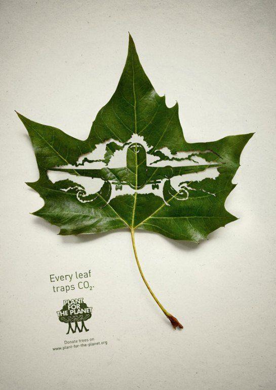#3 Pesawat terbang Doi juga menyampaikan bahwa daun dapat menyerap CO2