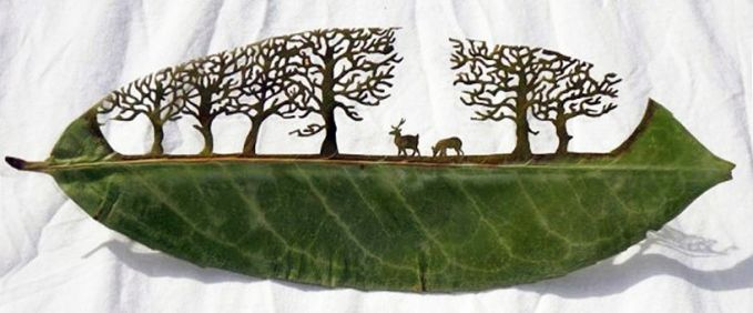 #4 Rusa makan rumput di antara pepohonan