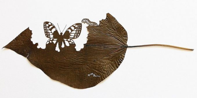 #8 Seekor kupu-kupu yang sedang mengembangkan sayapnya