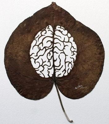 #9 Di dalam daun juga terdapat otak
