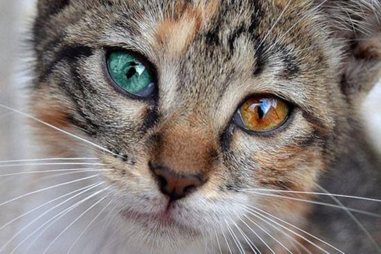 bukan pake kontak lens loh.. tapi emang aslinya emang gitu matanya..