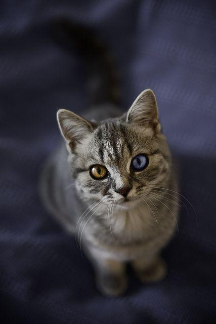 mimin belum pernah sih ketemu kucing yang unik begitu..