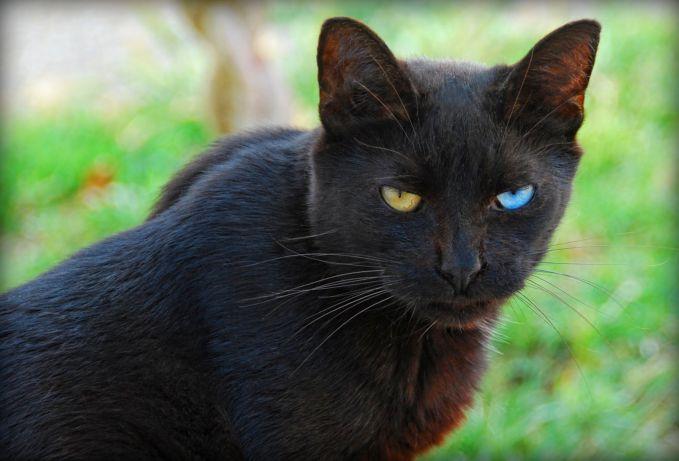 wow! walaupun bulunya hitam legam dan seram, tapi matanya penuh warna menarik..