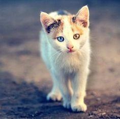 beruntung banget deh kalo punya kucing unik kayak gitu