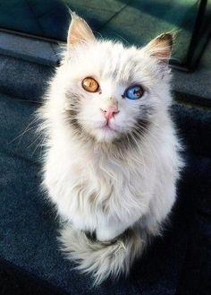 pecinta kucing pasti mupeng...