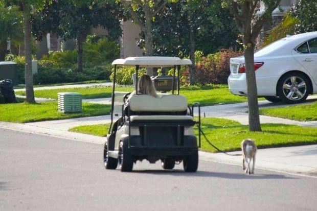 Males banget ni orang mau mengajak jalan anjingnya :3