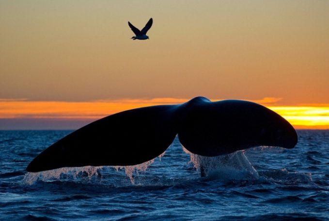 #10 Ekor paus di atas burung yang sedang terbang