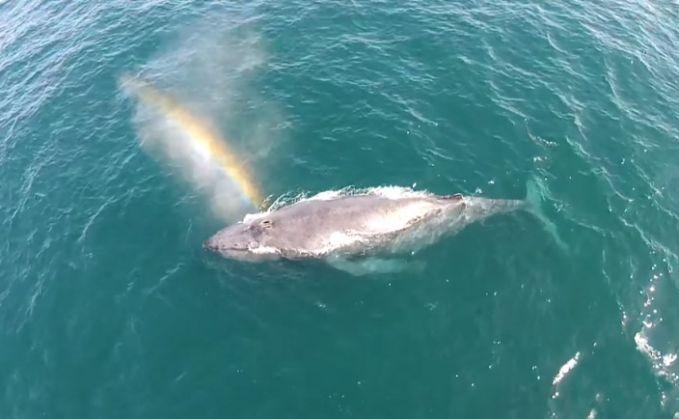 #16 Semburan nafas paus yang menghasilkan pelangi di atasnya