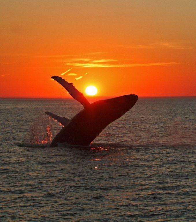 #20 Kerennya sunset yang dinikmati oleh paus!
