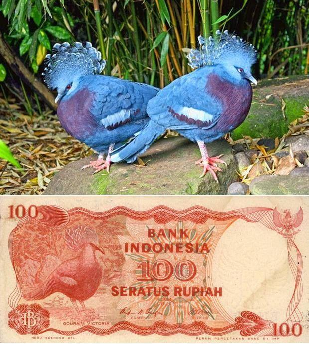 Burung di selembar uang 100 rupiah. Eh, di pecahan koin Rp 25 juga ada, lho!